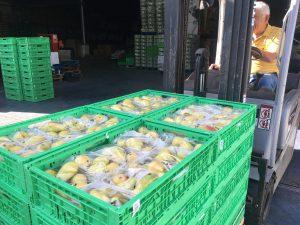 entrega de productos frescos en el banco de alimentos